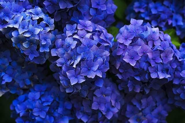 s-bloom-1851481_640