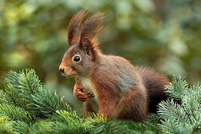 s-squirrel-619968_640