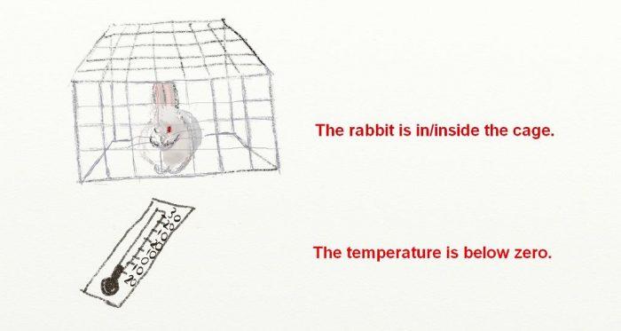 s-rabbit