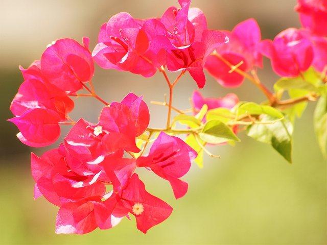 s-flower
