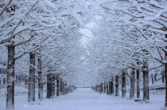 s-snow1