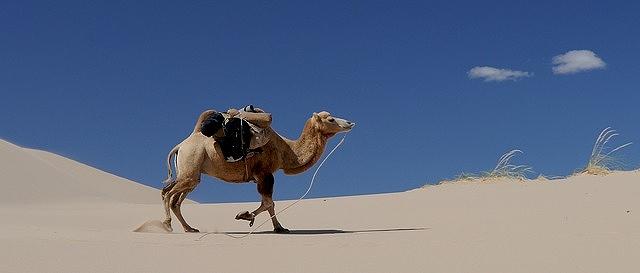 s-camel-3