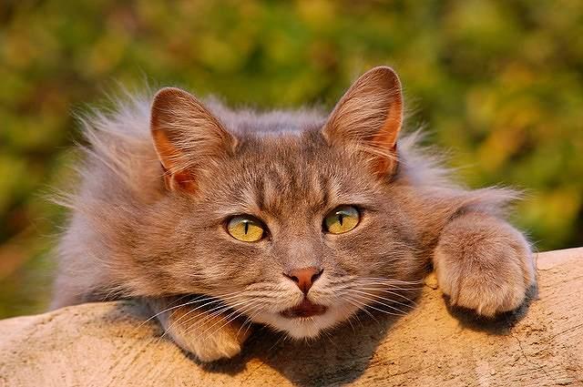 s-cat-401124_640