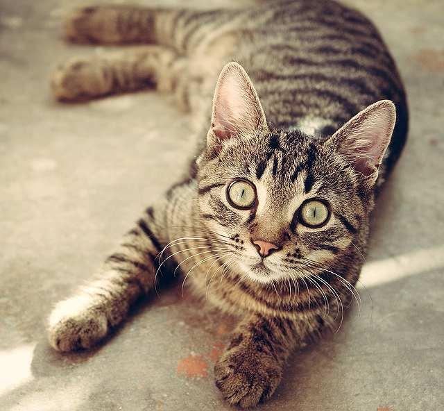 s-cat-618470_640
