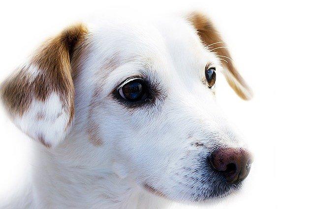 s-dog-72333_640