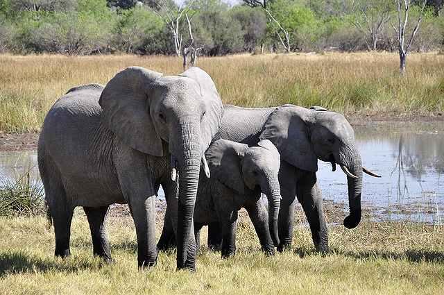 s-elephant-55255_640