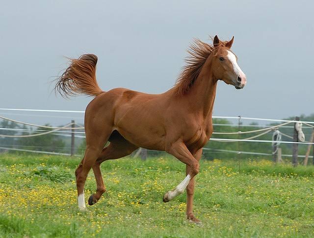 s-horse-2031086_640