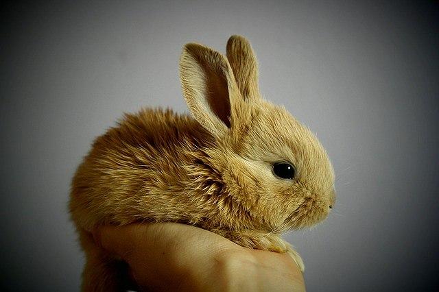 s-rabbit-3