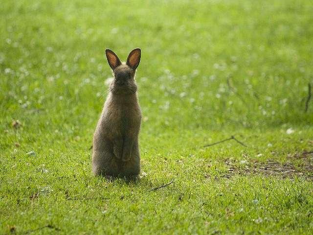 s-rabbit2