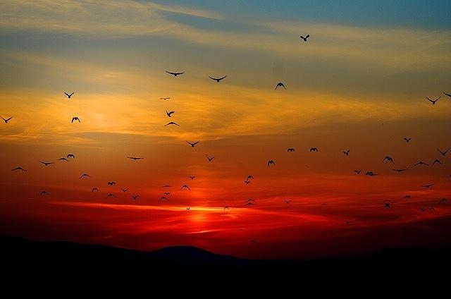 s-sunset-10
