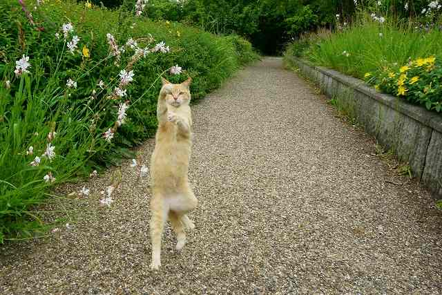 s-walking-cat