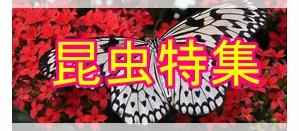 昆虫特集2