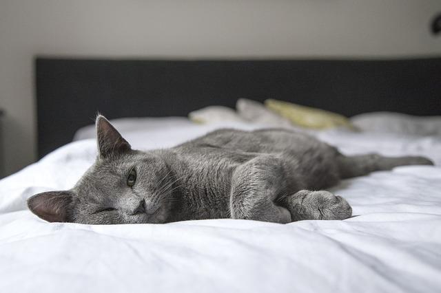 cat-1818927_640