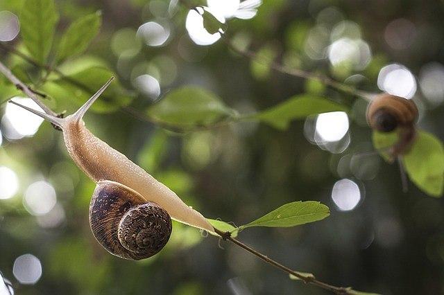 s-snail-1