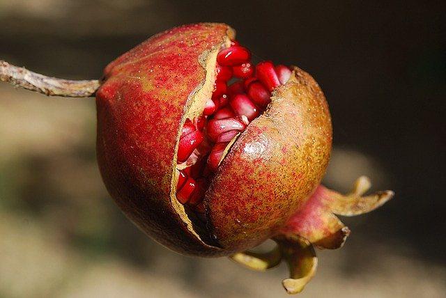 s-pomegranate-2
