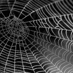 s-spider-web-with-water-beads