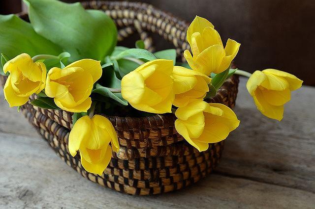 s-tulips-1