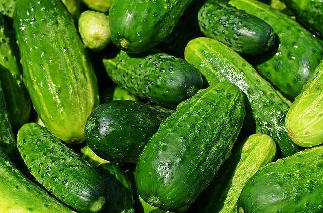 s-cucumbers-40