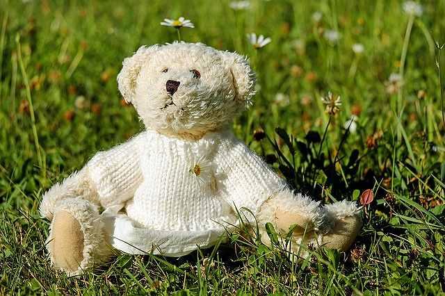 s-teddy-40