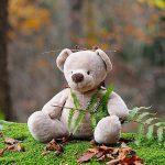 s-teddy-bear-50