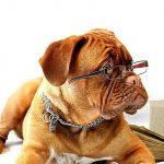 s-dog-734689_640
