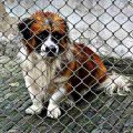 s-animal-welfare-1116206_640