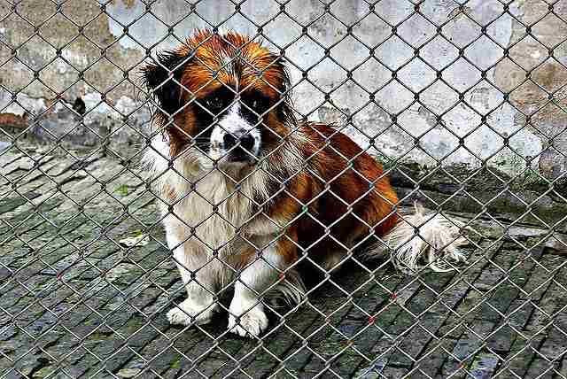 s-animal-welfare-1116206_640