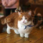 s-cat-2227906_640