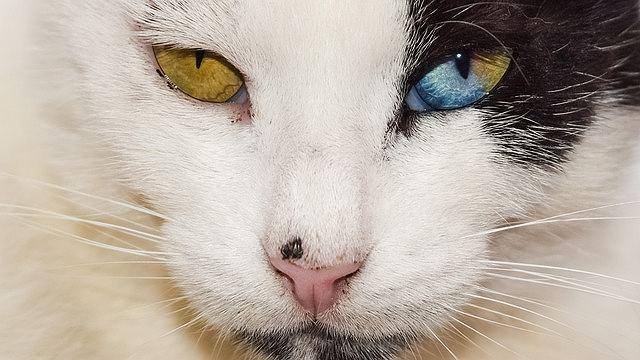 s-eyes-2344284_640