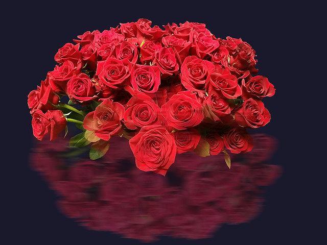 s-roses-2044273_640