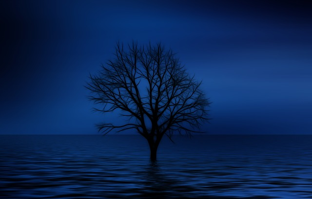 tree-738816_640