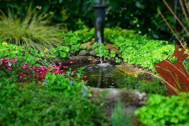 s-garden-768142_640