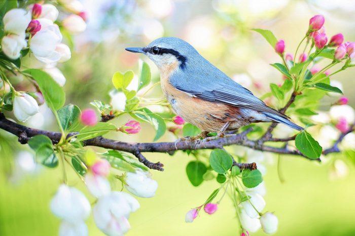s-spring-bird-2295431_1920