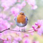 s-spring-bird-2295436_1920