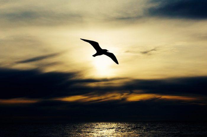 s-seabird-768584_1920