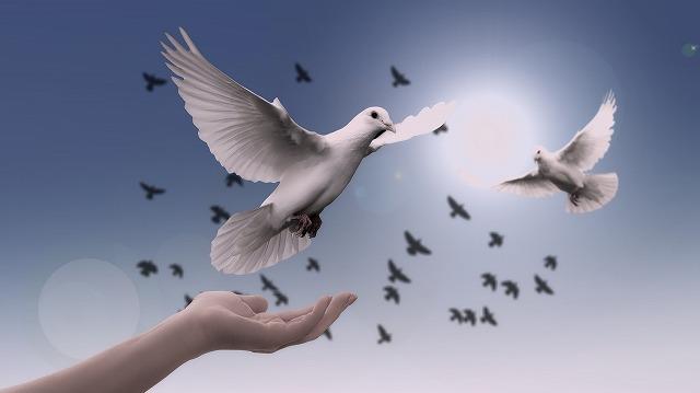 s-dove-3426187_1920